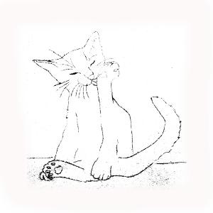 Los Gatos, Grandes y Pequeñas