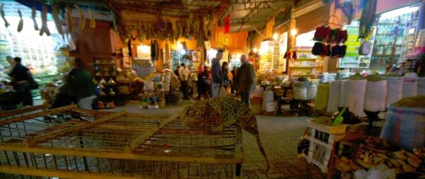 marrakechseven